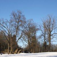 Снежная мелодия уходящей зимы... :: Tatiana Markova