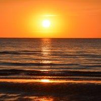 закат на море :: linnud