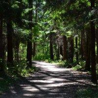 пополуденный лес :: Сергей Симановский