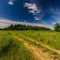 Летний день :: Валентин Котляров