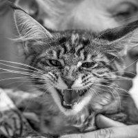 Женщина-кошка :: Владимир Питерский