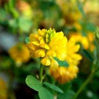 нежный цветочек) :: Алёна Латыпова