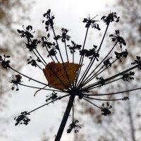 Зонт с пограничья :: Peripatetik