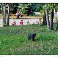 Жил да был чёрный кот... :: muh5257