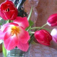 Нежные тюльпаны :: Елена Семигина