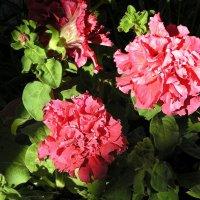 В мире цветов так тепло и прохладно. :: Татьяна и Александр Акатов