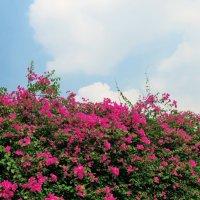 Облако цветочки нюхает ) :: Наталья Нарсеева