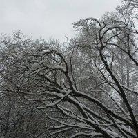 Выпал свежий снег. :: Ольга
