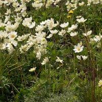 Весенние цветы :: Владимир Болдырев