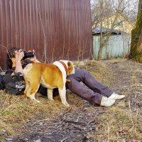 Хозяин-фотограф, это такая головная боль!!! :: Ирина Нафаня