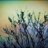 ..грезы о весне :: Ирина Сивовол