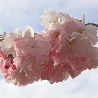 Розовое облачко :: Alexander