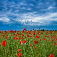 Перед грозой :: Светлана Бажан