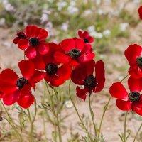 Цветы пустыни :: Валерий Цингауз