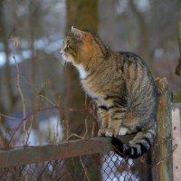 кошка на заборе :: linnud