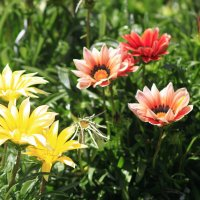 Цветы :: Fiodor