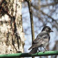 Птичка :: Алёна Маненкова