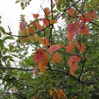 Осенние листья. :: Вера Щукина