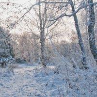 начало зимы :: Galina