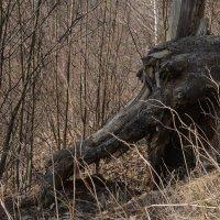 морда героя древнеславянской мифологии, нечисть какая-то... :: Svetlana AS