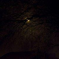 Когда звезды спускаются на ветви... :: Ирина Белавенцева