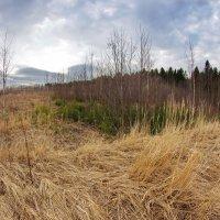 Смятые травы :: Валерий Талашов