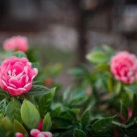 Цветы :: Denis Karpiets