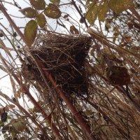 Гнездо малиновки :: Александра Глушакова