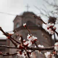 Весна в Крыму :: Ардалион Иволгин