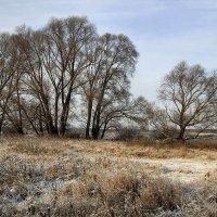 Пейзаж с деревьями :: Сергей Михайлович