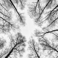 Артерии леса. :: Юрий Боярченко