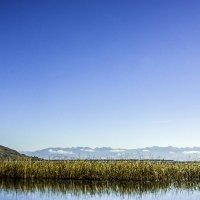 Скадарское озеро :: Gennadiy Karasev