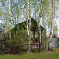 В зеленой дымке весенних  берез :: Ната Волга