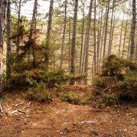 лес :: виктория коробчук