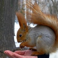 Белки в парке Горького :: Наиля