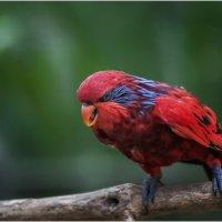 Жрать давай...Куала-Лумпурский парк птиц...Малайзия. :: Александр Вивчарик