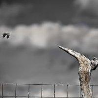 ..так хочется летать... :: Галина Юняева
