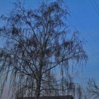 Домик в деревне :: M Marikfoto