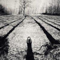 Длинные тени на лугу :: Анастасия Бывших