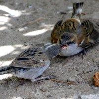 Кормление птенца :: Елена Шемякина