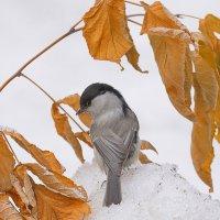 Осенние краски зимы :: Влад