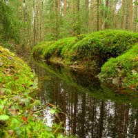 лес весной :: Михаил Жуковский