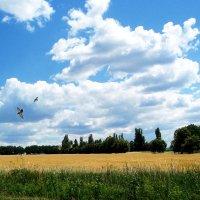 полюшко-поле :: георгий петькун