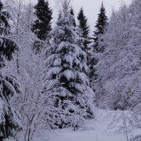 Еще одна зима :: Сергей Петров