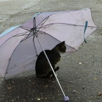 Дождик ... :: JT --------      SHULGA  Alexei