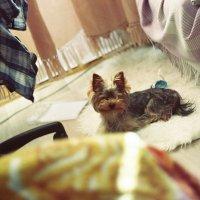 Собака-улыбака :: Валерия Гильман