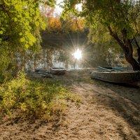 солнышко по осени утонуло в речке.... :: Алена Рыжова