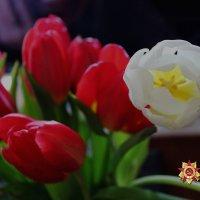 Тюльпаны. :: Larisa