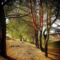 В лесу :: Виктория Власова