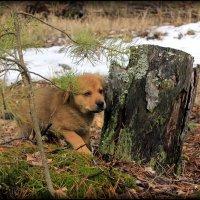 Герда в лесу :: Алексей Подлесный